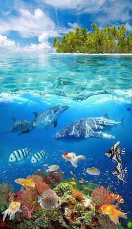 Подводный мир +