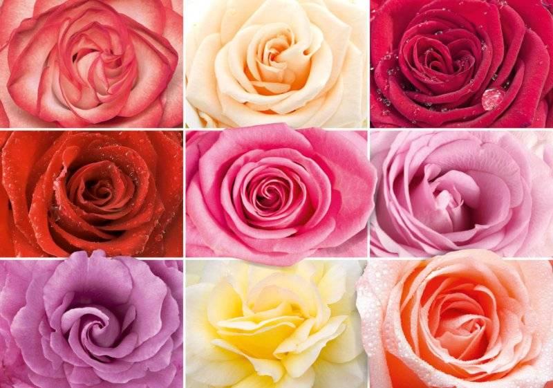Купить фотообои для стен: Разноцветное настроение 1