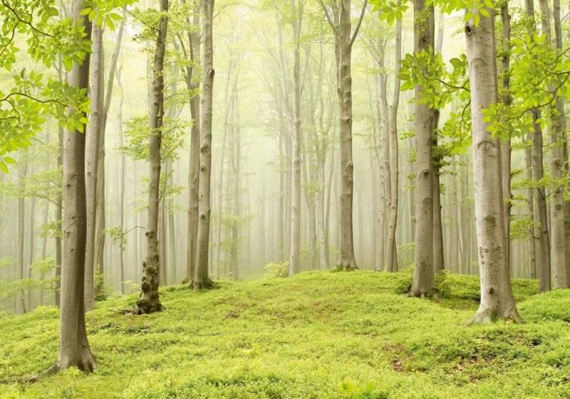 Купить фотообои для стен: Весенний лес 1
