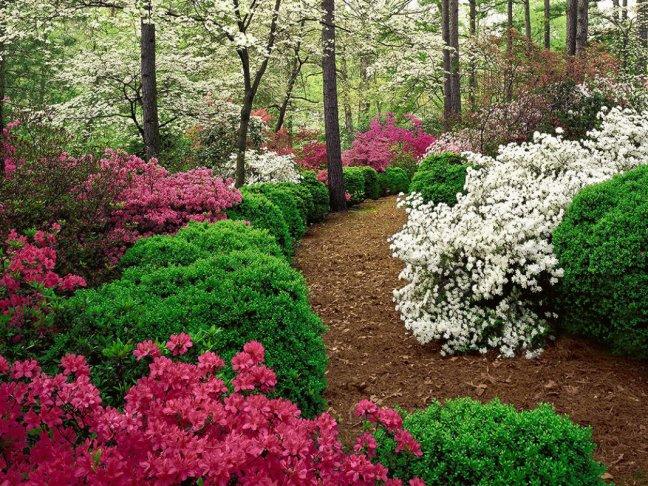 Купить фотообои для стен: Весенний сад