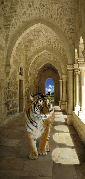 Купить фотообои для стен: Тигр