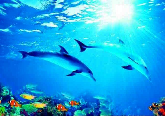 Купить фотообои для стен: Дельфины 1