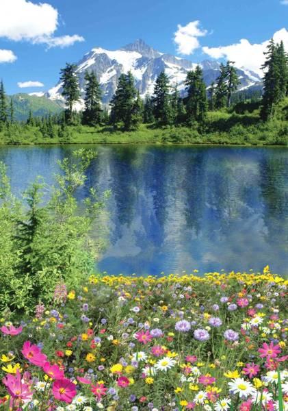 Купить фотообои для стен: Алтайское лето 1