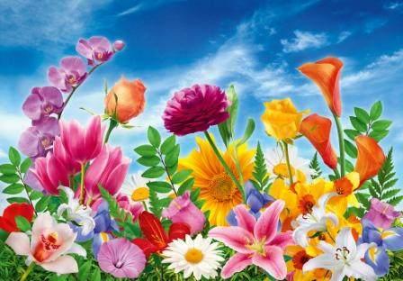 Купить фотообои для стен: Мир цветов