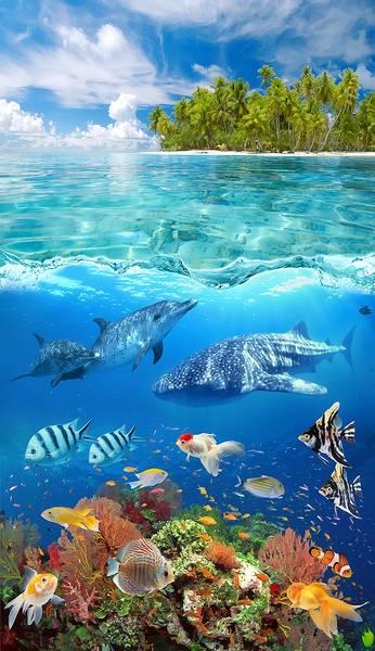 Купить фотообои для стен: Подводный мир +