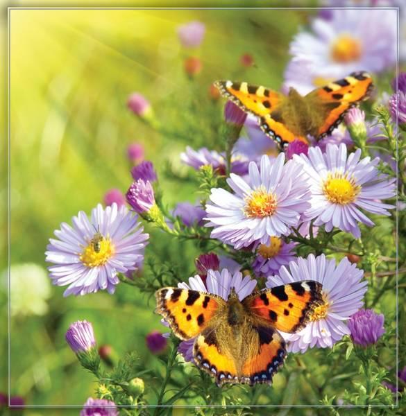 Купить фотообои для стен: Бабочки