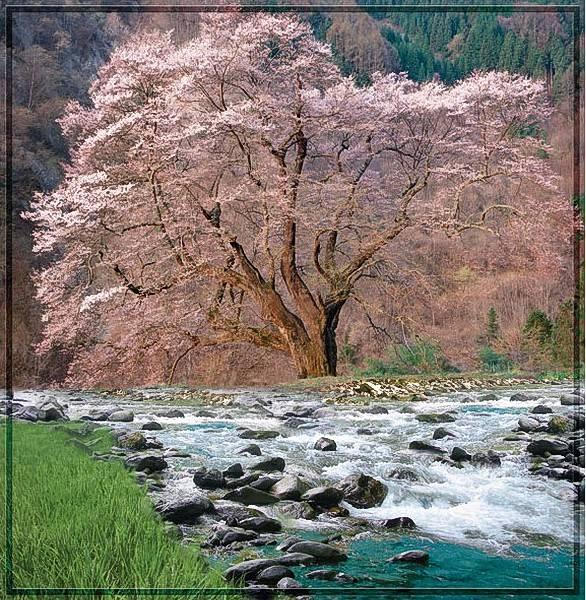 Купить фотообои для стен: Весна в горах