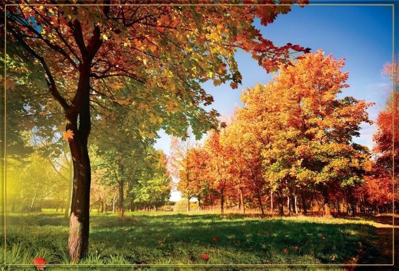 Купить фотообои для стен: Золотая осень