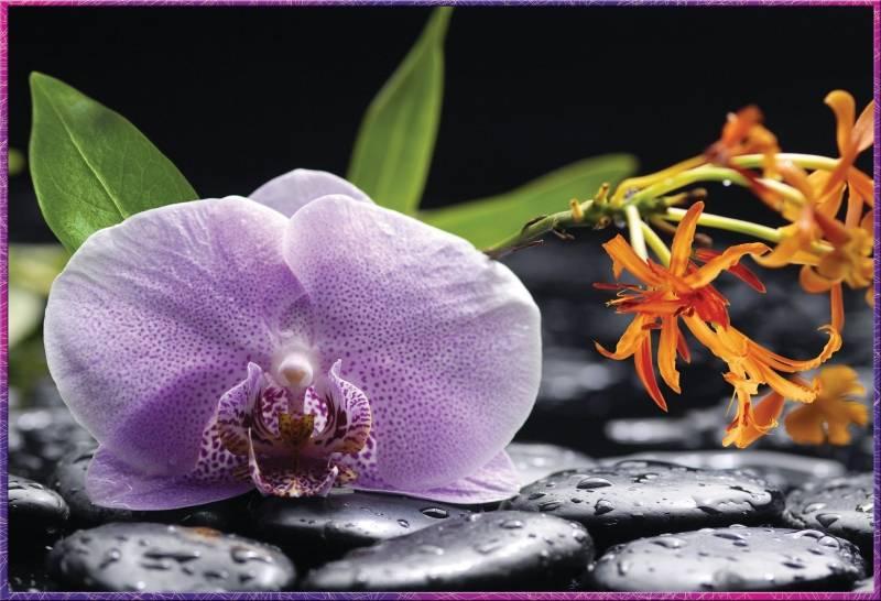 Купить фотообои для стен: Каменный цветок