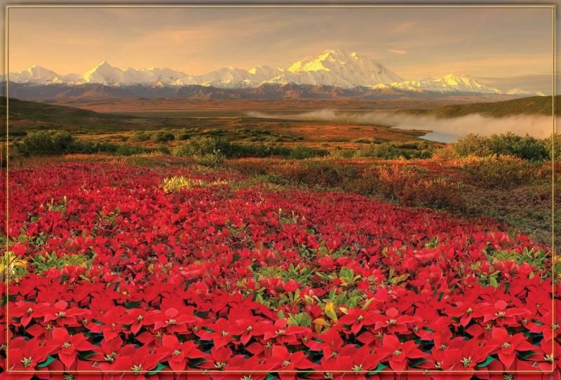 Купить фотообои для стен: Цветение в горах