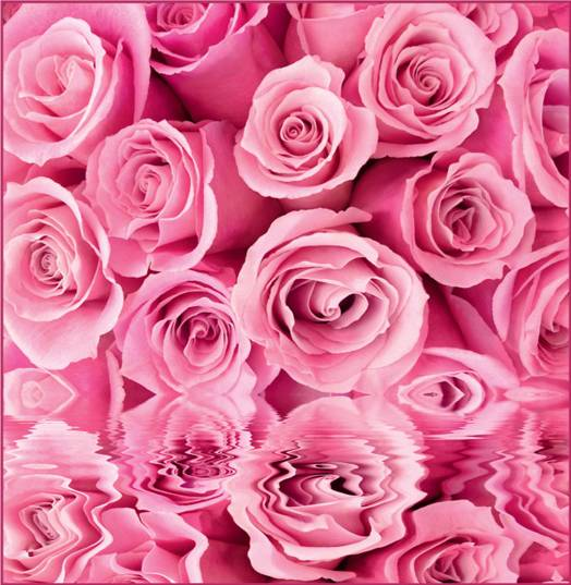 Купить фотообои для стен: Розовые розы, отражение
