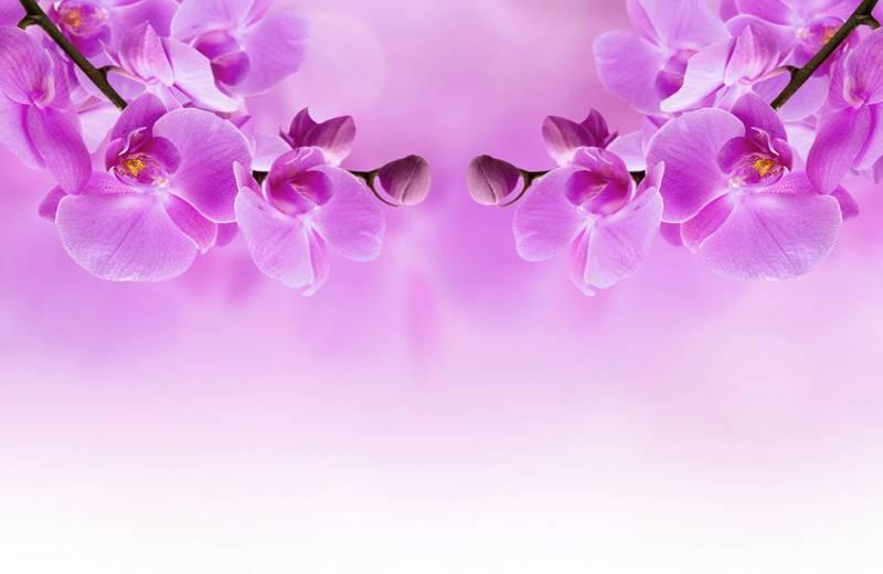 Купить фотообои для стен: Орхидеи 2