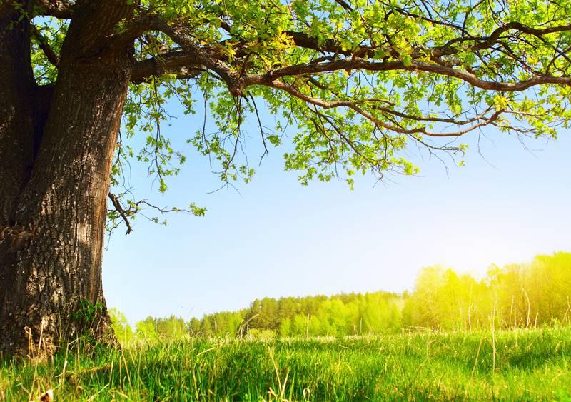 Купить фотообои для стен: Под деревом