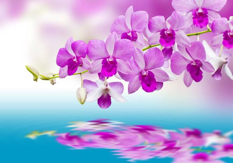 Купить фотообои для стен: Орхидеи над водой
