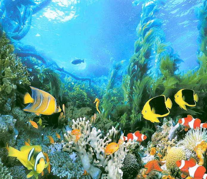 Купить фотообои для стен: Подводное царство