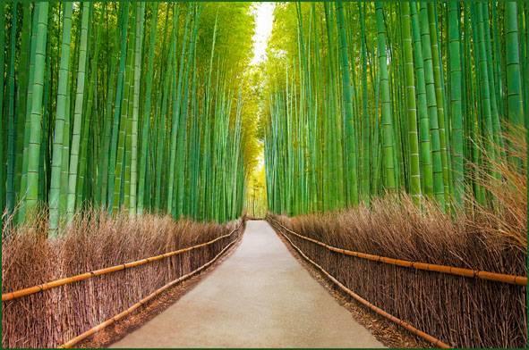Купить фотообои для стен: Бамбуковая роща