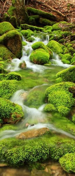 Купить фотообои для стен: Лесной ручей