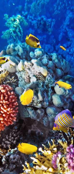 Купить фотообои для стен: Подводный мир, коралловые рыбки