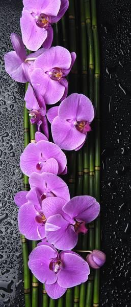 Купить фотообои для стен: Орхидеи на камнях
