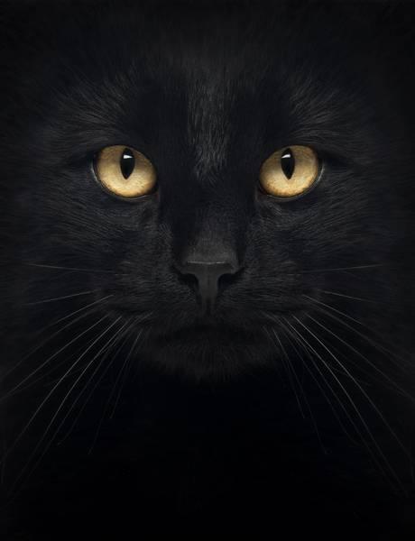 Купить фотообои для стен: Черный кот