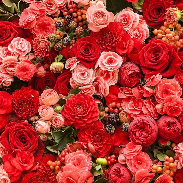 Купить фотообои для стен: Разноцветие