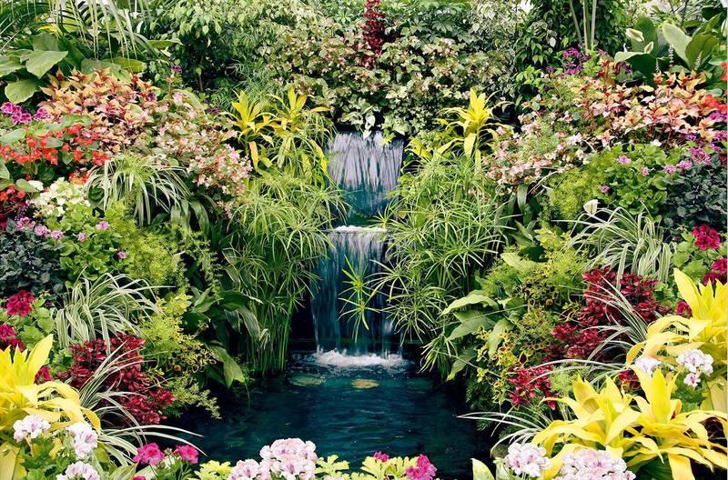 Купить фотообои для стен: Ботанический сад