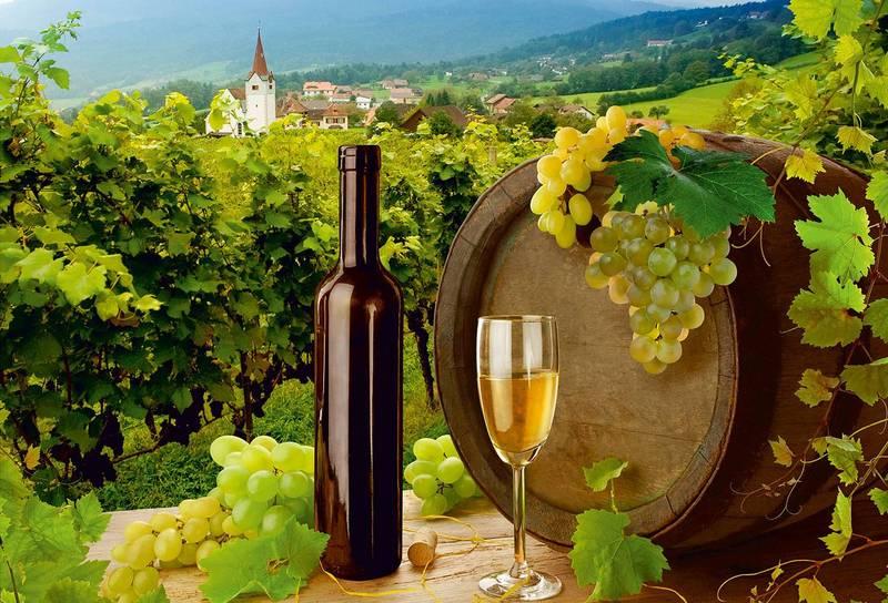 Купить фотообои для стен: Виноградная долина