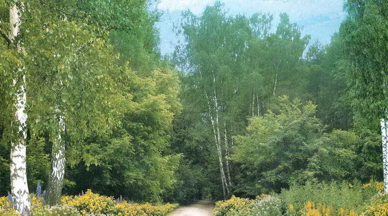 Купить фотообои для стен: Лесов таинственная сень