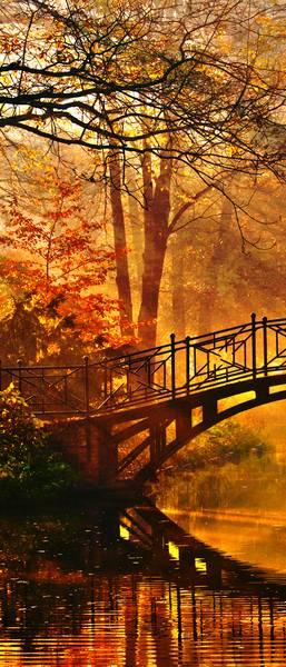 Купить фотообои для стен: Осенний парк