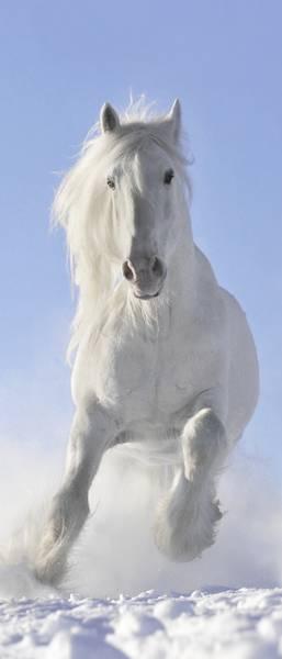Купить фотообои для стен: Белый конь