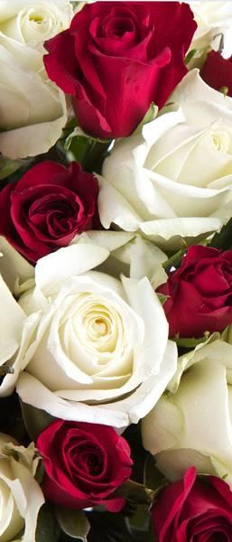 Купить фотообои для стен: Розы в букете
