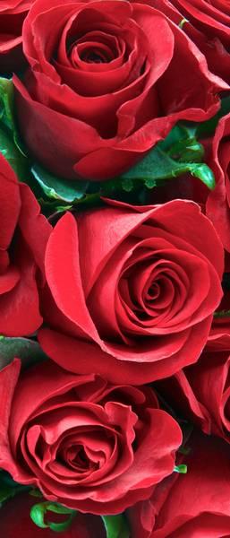 Купить фотообои для стен: Алые розы