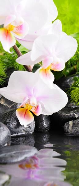 Купить фотообои для стен: Орхидеи у воды