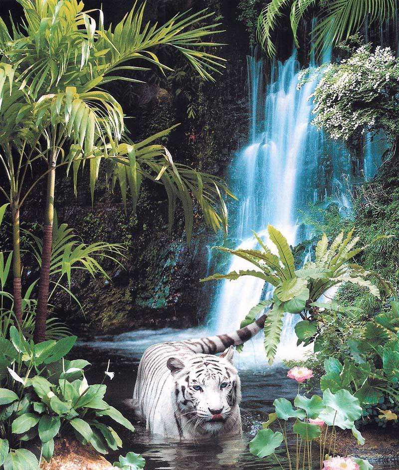 Купить фотообои для стен: Тропическая сказка