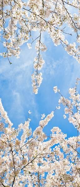 Купить фотообои для стен: Весеннее небо