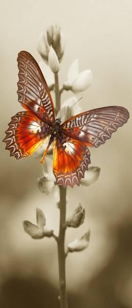 Купить фотообои для стен: Бабочка