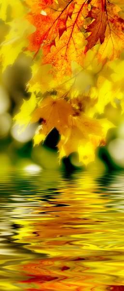 Купить фотообои для стен: Осенний ручей
