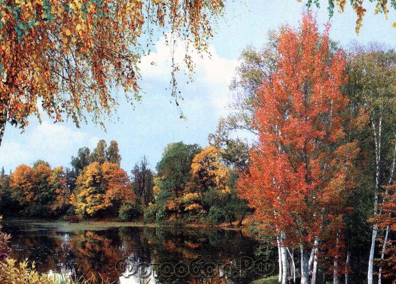 Купить фотообои для стен: Бархатная осень