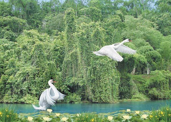 Купить фотообои для стен: Белые крылья