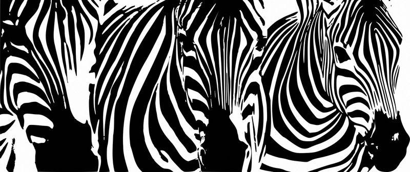 Купить фотообои для стен: Зебры