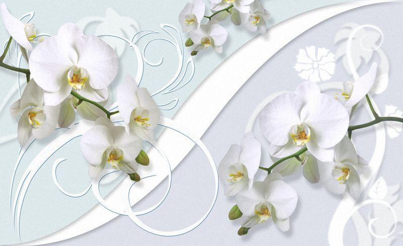 Купить фотообои для стен: Белые орхидеи