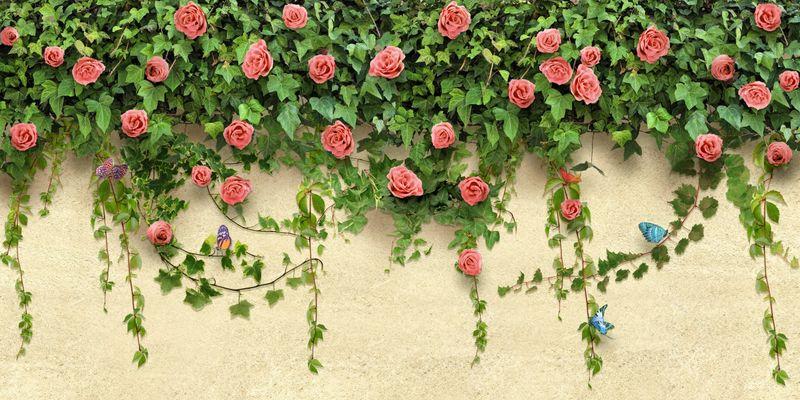 Купить фотообои для стен: Розы на стене