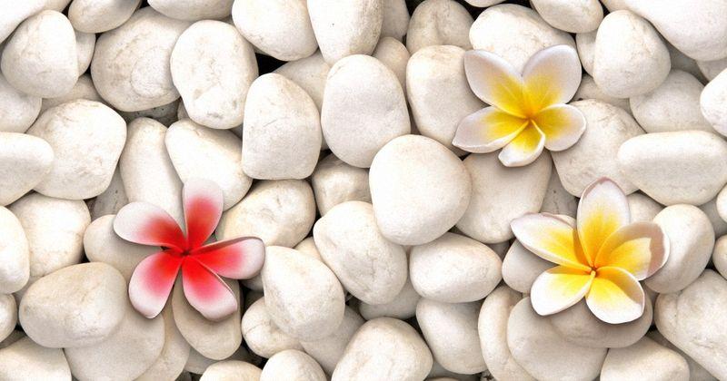 Купить фотообои для стен: Плюмерия на камнях