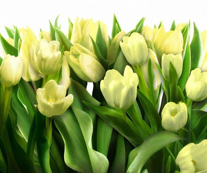Купить фотообои для стен: Желтые тюльпаны