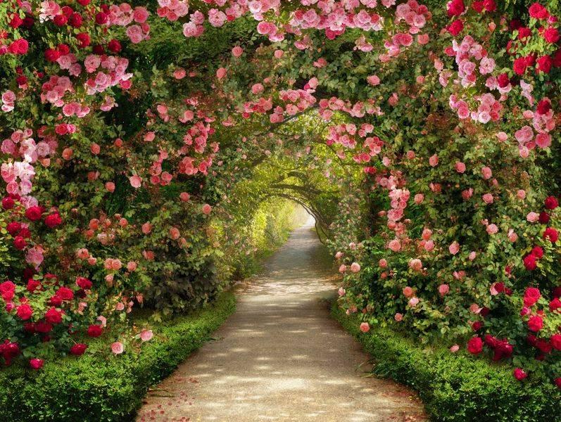 Купить фотообои для стен: Цветочная арка