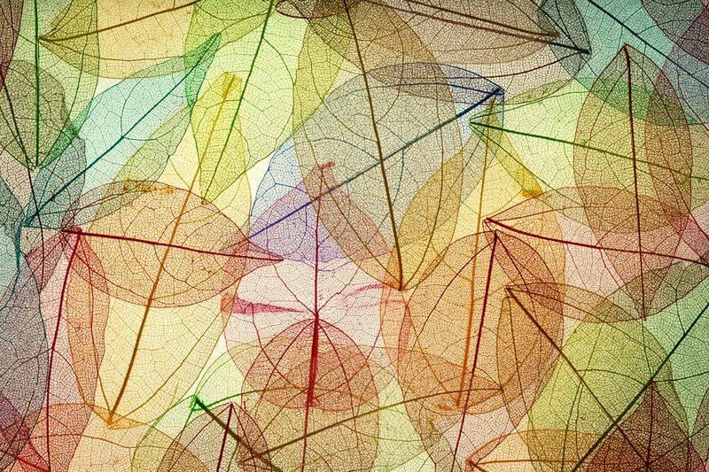 Купить фотообои для стен: Разноцветные листья