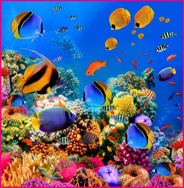 фото морские глубины