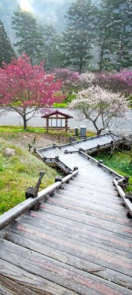 Купить фотообои для стен: Японский пейзаж