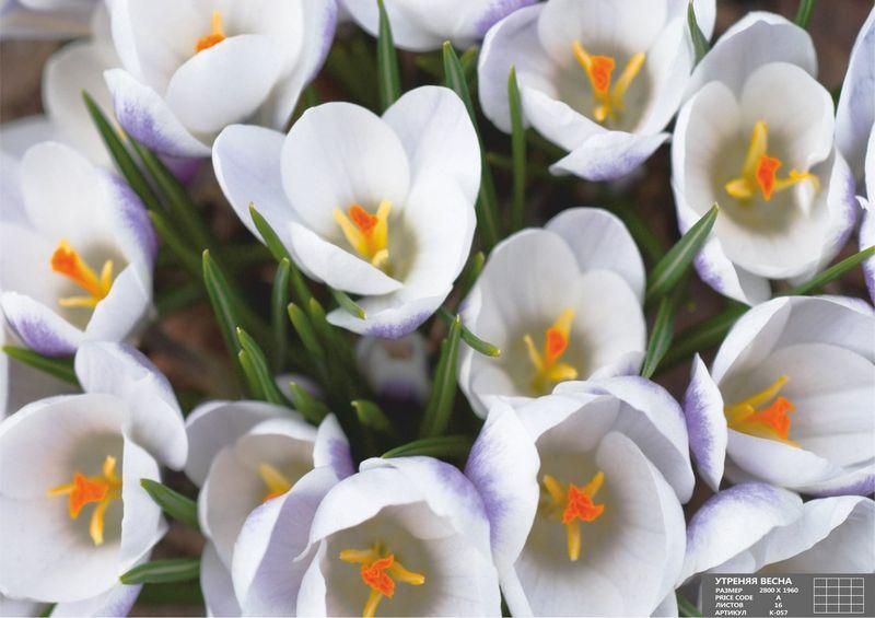 Купить фотообои для стен: Утренняя весна