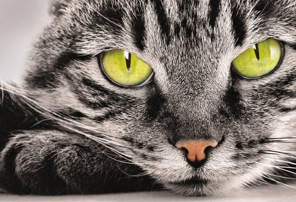 Купить фотообои для стен: Кошка